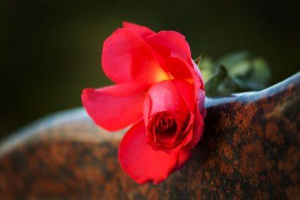 rose-monument-cimetiere